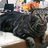 Adopt A Pet :: Dutch - Anchorage, AK