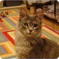 Adopt A Pet :: Chili - Muncie, IN