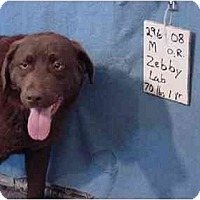 Adopt A Pet :: Zebby/Adopted! - Zanesville, OH