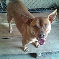 Adopt A Pet :: Precious - Remlap, AL