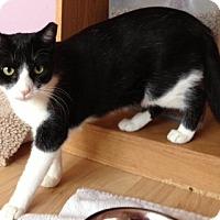 Adopt A Pet :: Cisco - Byron Center, MI