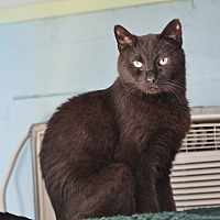 Adopt A Pet :: Mike - Ocean View, NJ