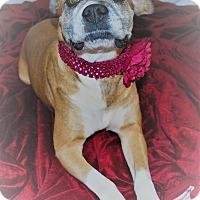 Adopt A Pet :: Blossom - Waupaca, WI
