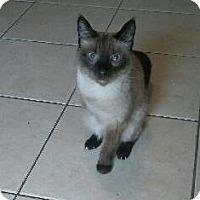 Adopt A Pet :: Sookie - Seminole, FL
