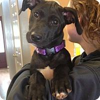 Adopt A Pet :: Bailey - Knoxville, TN