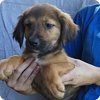 Adopt A Pet :: Fluffy - Oviedo, FL