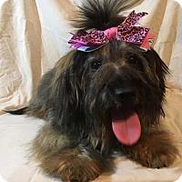 Adopt A Pet :: Hannah - sylmar, CA