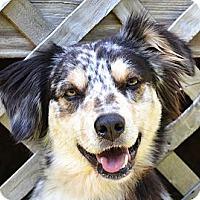 Adopt A Pet :: *Meadow & Oakley-PENDING - Westport, CT