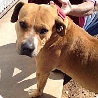 Adopt A Pet :: MINDY - Childress, TX