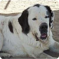Adopt A Pet :: Smokey - Sparks, NV