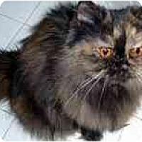 Adopt A Pet :: Helena - Arlington, VA