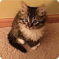 Adopt A Pet :: Chandler - Plymouth, MN