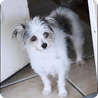 Adopt A Pet :: JADE - Fort Worth, TX