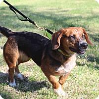 Adopt A Pet :: Cabella - Columbia, TN