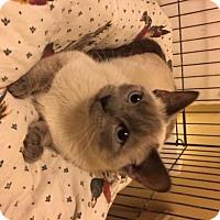 Adopt A Pet :: Jaden - Delmont, PA
