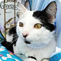 Adopt A Pet :: Travis - Ocean Springs, MS