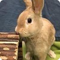 Adopt A Pet :: Rocco - Woburn, MA
