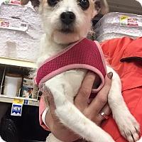 Adopt A Pet :: Leeza - Surrey, BC