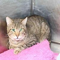 Domestic Mediumhair Cat for adoption in Salt Lake City, Utah - *FLORIDA*