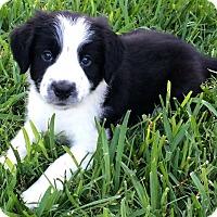 Adopt A Pet :: Freckles - Allen, TX