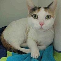 Adopt A Pet :: *MAMA - Norco, CA