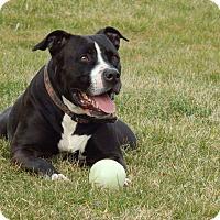 Adopt A Pet :: Titus - New Philadelphia, OH