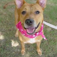 Adopt A Pet :: Roo - Helena, AL