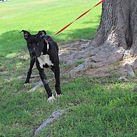 Adopt A Pet :: A13 Comet - Odessa, TX