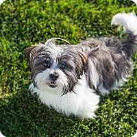 Adopt A Pet :: BraveHeart - Ogden, UT