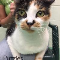 Adopt A Pet :: Puzzles - Annapolis, MD