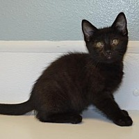 Adopt A Pet :: Vermont - Knoxville, IA