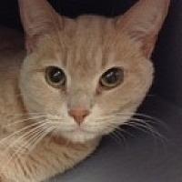 Adopt A Pet :: Puma - Toronto, ON