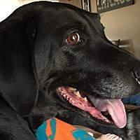 Adopt A Pet :: Sierra - Palatine, IL