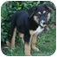 Photo 1 - Shepherd (Unknown Type) Mix Puppy for adoption in Los Angeles, California - Pacman von Palmdale
