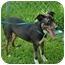 Photo 4 - Hound (Unknown Type)/Terrier (Unknown Type, Medium) Mix Puppy for adoption in College Station, Texas - Kahlua