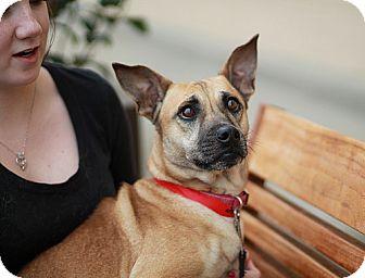 Shepherd (Unknown Type)/Terrier (Unknown Type, Medium) Mix Dog for adoption in Marietta, Georgia - Carmen