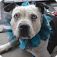 Adopt A Pet :: Allie - I'm special! - Los Angeles, CA