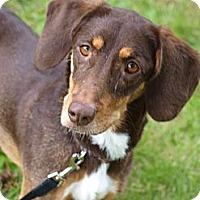 Adopt A Pet :: Allie - Toronto/Etobicoke/GTA, ON