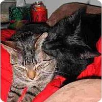 Adopt A Pet :: Pua - Proctor, MN