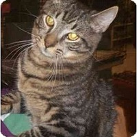Adopt A Pet :: Doodlebug - Richmond, VA