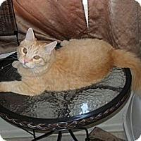 Adopt A Pet :: Parker - Whittier, CA
