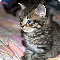 Adopt A Pet :: Dixie - Xenia, OH