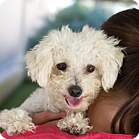Adopt A Pet :: Orchid - Mission Viejo, CA