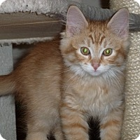 Adopt A Pet :: Griffin - Portland, OR