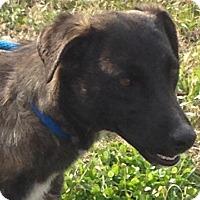 Adopt A Pet :: CHELSEA - Bedminster, NJ
