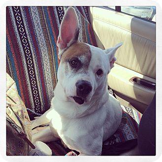Terrier (Unknown Type, Medium) Mix Dog for adoption in Manassas, Virginia - Dude *adoption pending