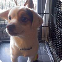 Adopt A Pet :: BETSEY - Mahopac, NY