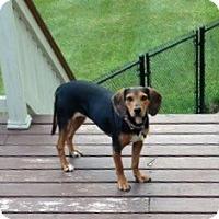 Adopt A Pet :: Penny - Grafton, MA