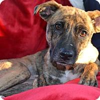 Adopt A Pet :: Millie - Richmond, VA