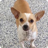Adopt A Pet :: Kenzie - Washington, PA